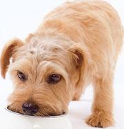 アガリスクを食べる犬の写真